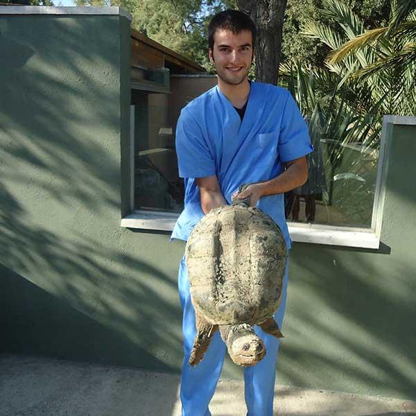 Veterinario con una tortuga