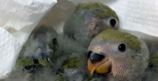 Imagen mascotas recién nacidas
