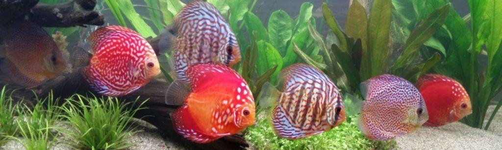 Imagen acuario doméstico