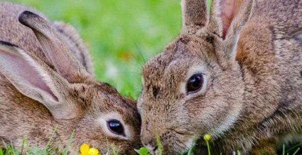 Conejos famosos de Animales Exóticos 24h