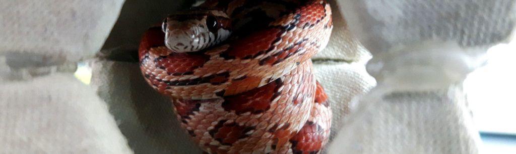 Imagen muda de reptiles