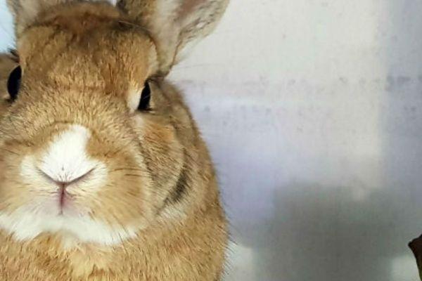 Imagen post enfermedades en conejos
