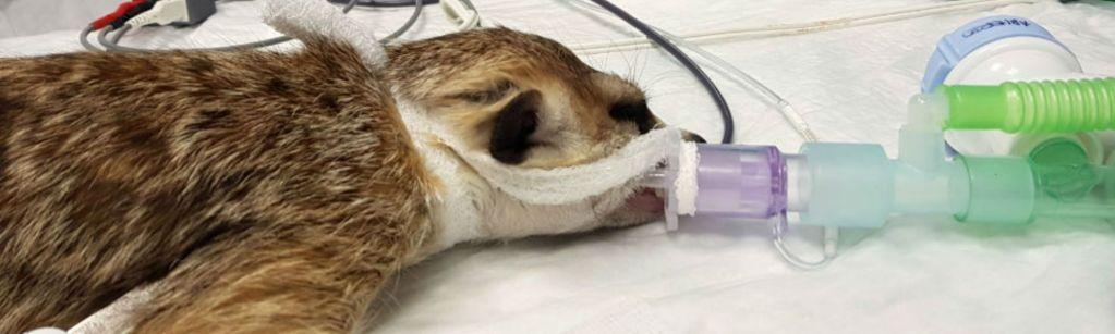 Imagen post anestesia en animales exóticos