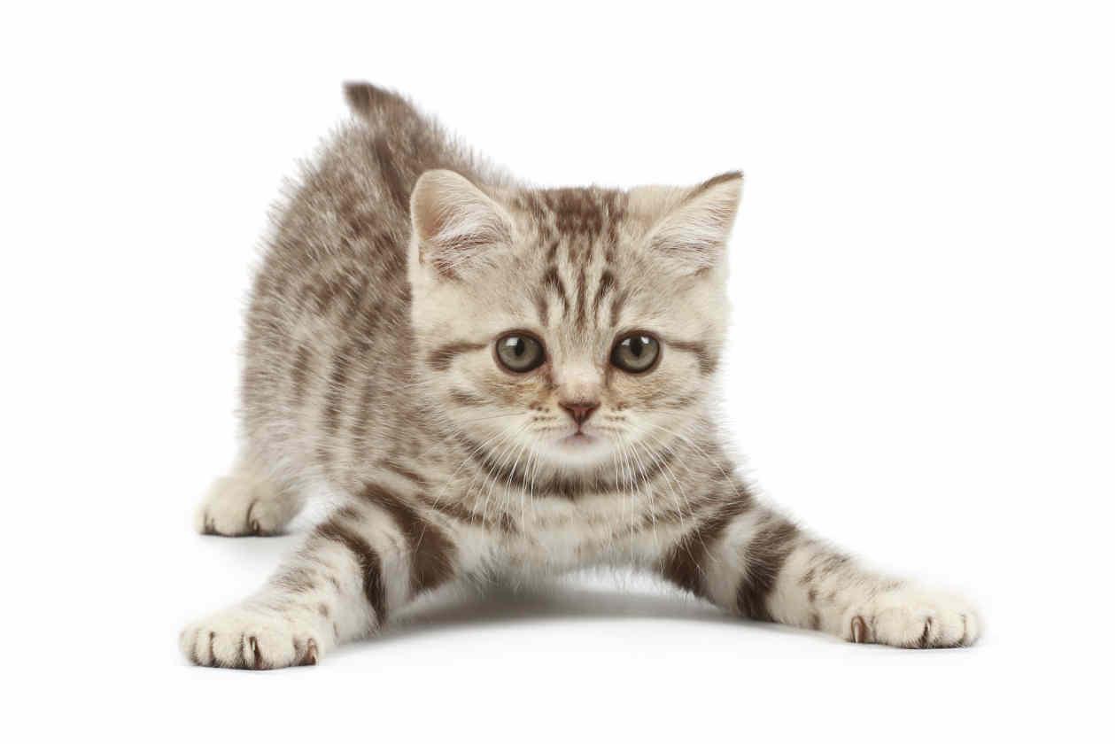 Resultado de imagen de gato