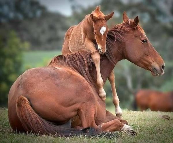 Animales Terrestres Para Colorear