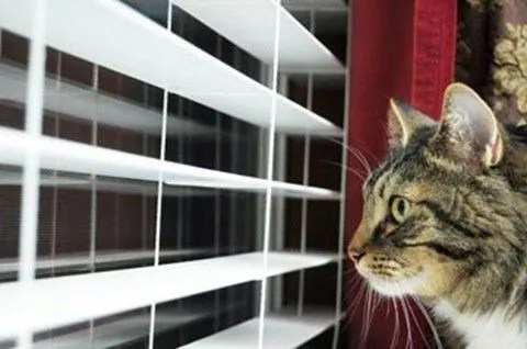 Ansiedad por separacion en felinos