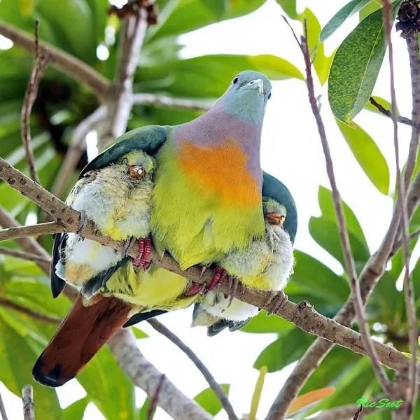 los-25-momentos-madre-e-hijo-mas-adorables-del-mundo-animal-pajaro-con-dos-crias
