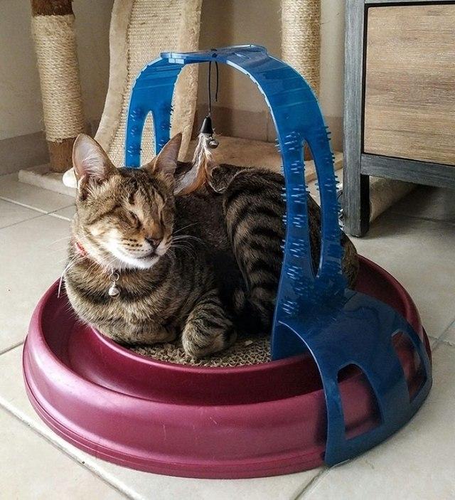 gatto cieco adottato