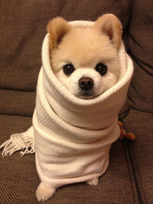 Keep Your Pups Bundled Up!
