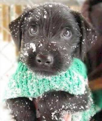 snow winter puppy