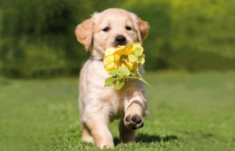 https://i2.wp.com/animalfair.com/wp-content/uploads/2013/04/cute-puppy-running-spring-dog-341x220.jpg