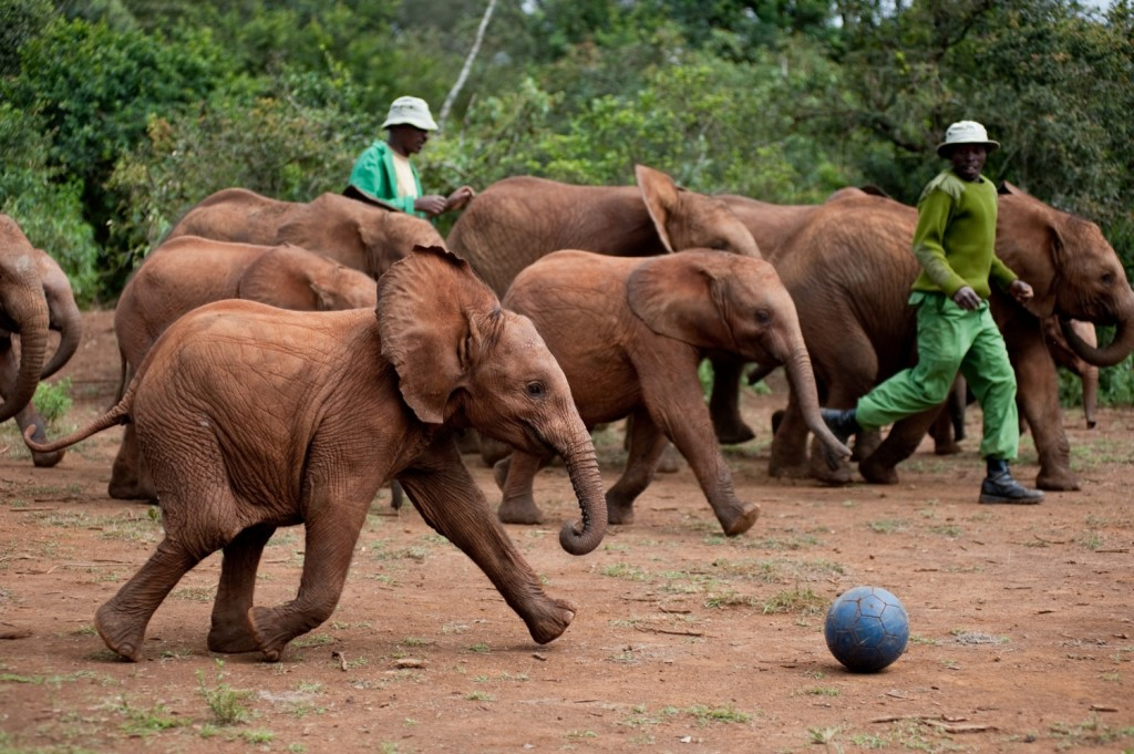 https://i2.wp.com/animalfair.com/wp-content/uploads/2014/06/born-to-be-wild-Elephants-1024x681.jpg