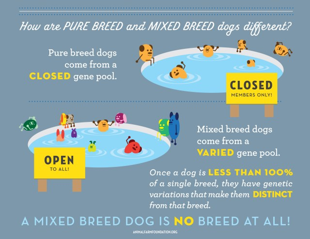 Animal Farm Foundation infographic 4