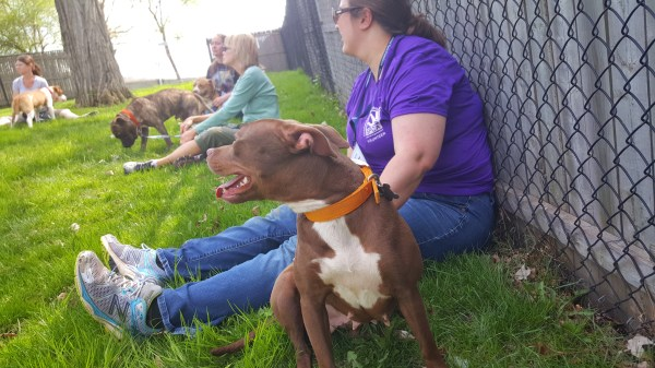 Suzy, Monaco, Dessta, and the rest of the dogs are banned from the adoption floor in PG County. Seen here enjoying hanging out with the interns at Animal Farm Foundation.