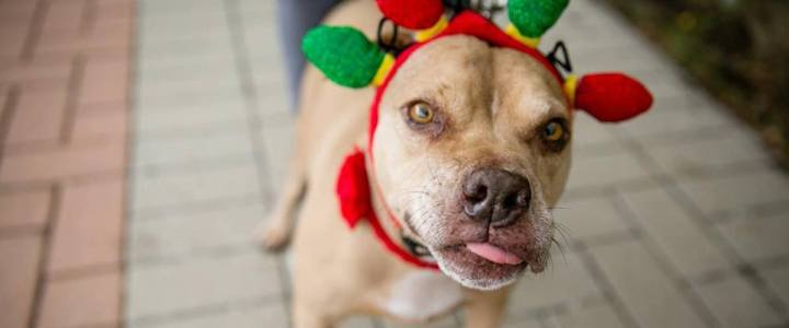 How Ugly Sweaters, Elves, and Lots of Singing Can Help Dogs Find Homes