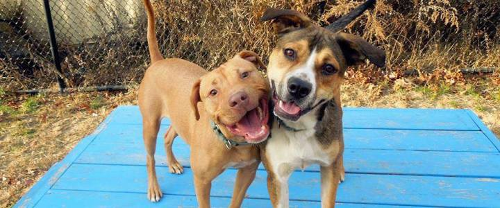 One Organization and One Shelter Changed the Lives of 24 Dogs from a Hoarding Situation