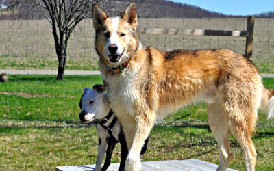 5 Tips to Help You Drop Breed Labels and Focus on Dogs as Individuals
