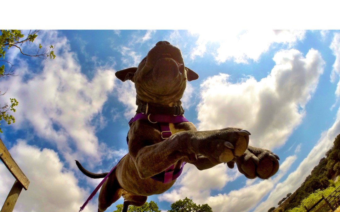 One Camera and a Lot of Adorable Dogs Can Change The Game of Adoption Marketing