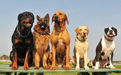 No, Science Doesn't Say Dog Breeds Have Distinct Personalities in Their DNA