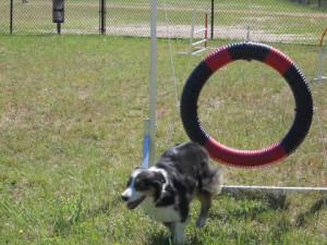 dog-agility 2