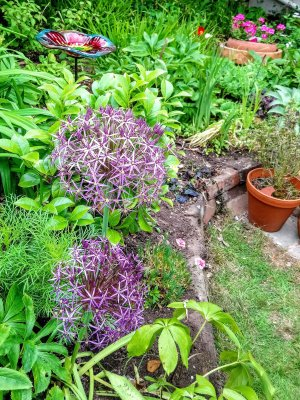 Alliums in a garden and a flower ornament