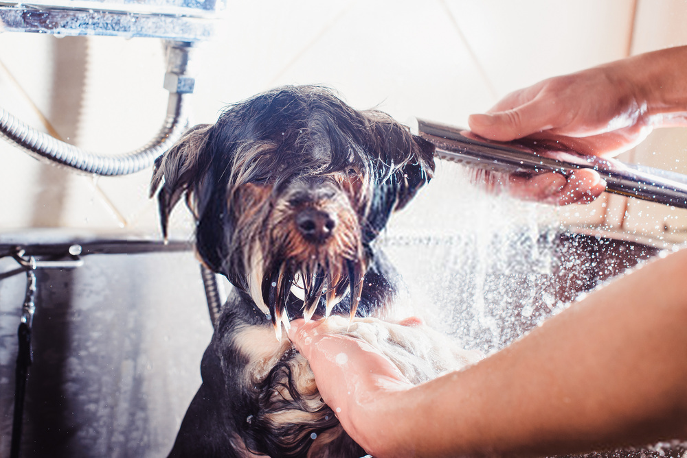 How Often Should I Wash My Dog?| Simple Guide On Canine Bathe