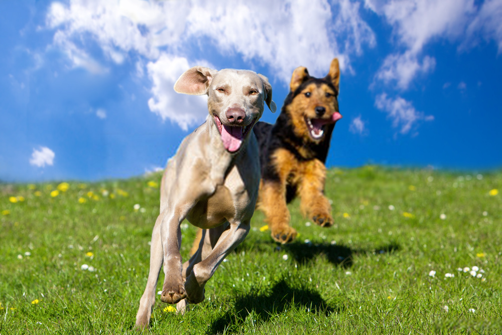 Are Dogs Colorblind?   How Do Canines See Things