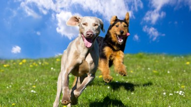 Are Dogs Colorblind? | How Do Canines See Things