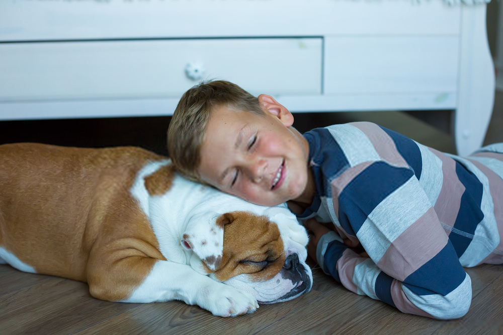 What Can I Give MY Dog For Pain Relief Dog Pain Relief Guide
