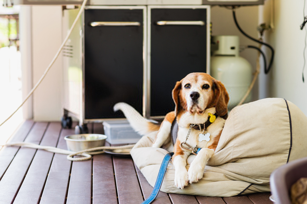 Train Your Dog To Sit ,Stay and Lay down