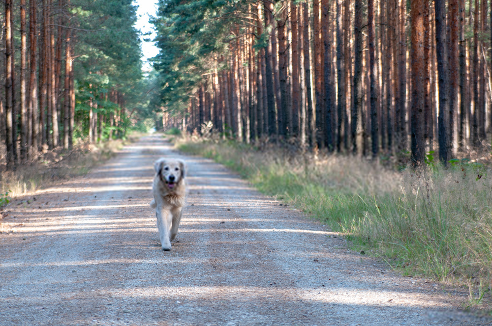 Do Dogs Go To Heaven?Where Do Dogs Go When They Die?