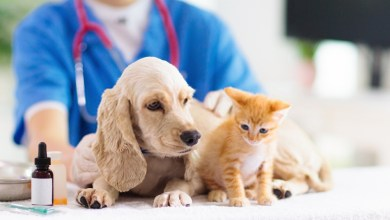 Dog Bite Treatment: Prevention Information And Treating Injuries