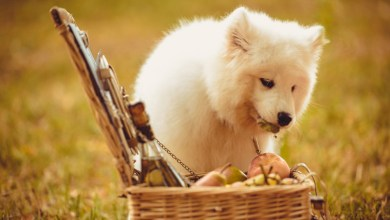 Can Dogs Eat Peaches?: A Simple Definition