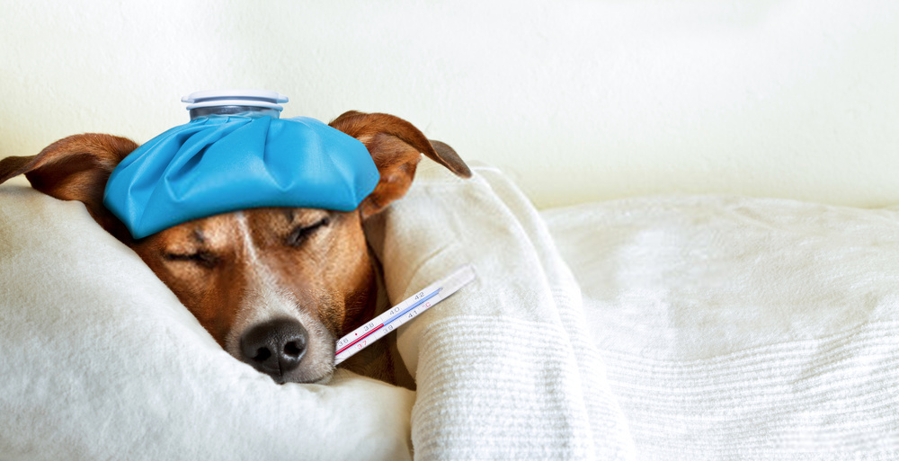 10 Dangerous Dogs' Diseases And Their Treatment
