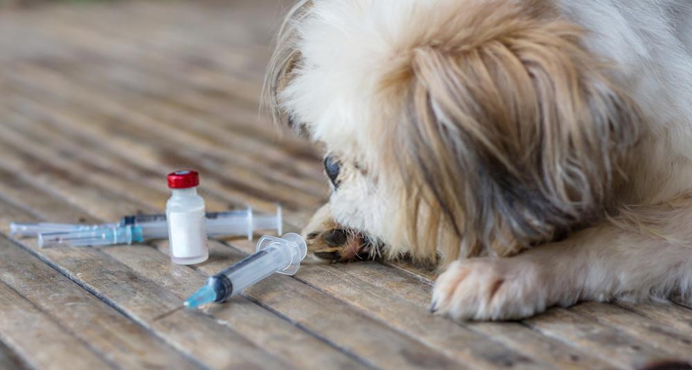 Dogs Get Rabies