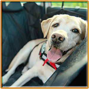Top 9 Best Dog Car Seat Covers Reviews 2019- Buying Guide