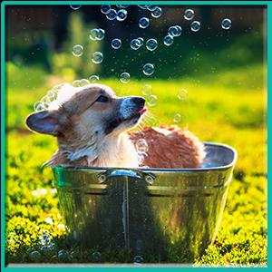 Top 10 Best Smelling Dog shampoo Reviews