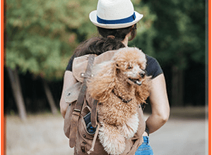 Top 8 Best Dog Backpack Carrier For Hiking Reviews