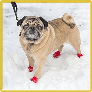 Top 8 Best Dog Boots Reviews 2020