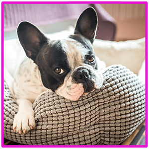 Top 10 Best Orthopedic Dog Bed for Small & Large Breeds