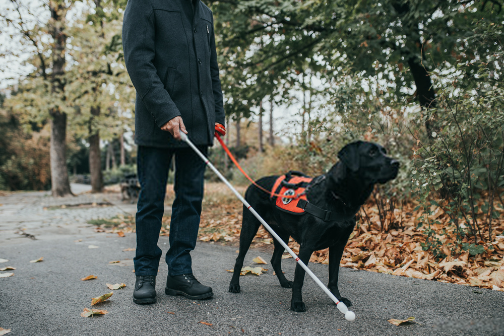 Why does drew lynch have a service dog?
