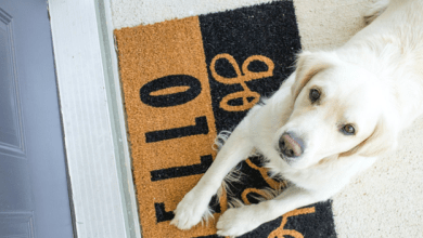 dormats for dogs review