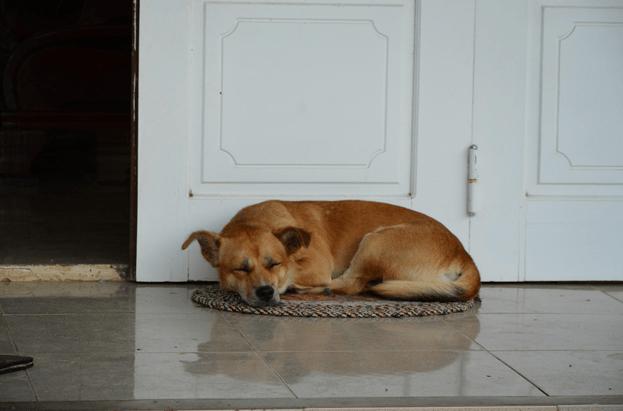 dormats for dogs