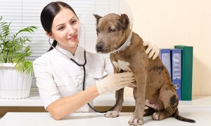 How much is too much for veterinary services?
