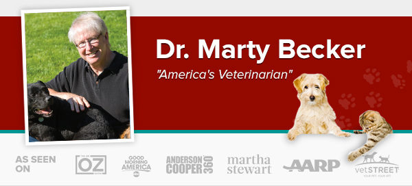 dr Marty Becker, America's veterinarian, pet loss, Twin Falls, Idaho, BlogPaws, WIPIN, Dog authority