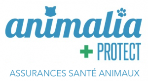 animalia protect assurance chien, assurance animaux, assurance chat