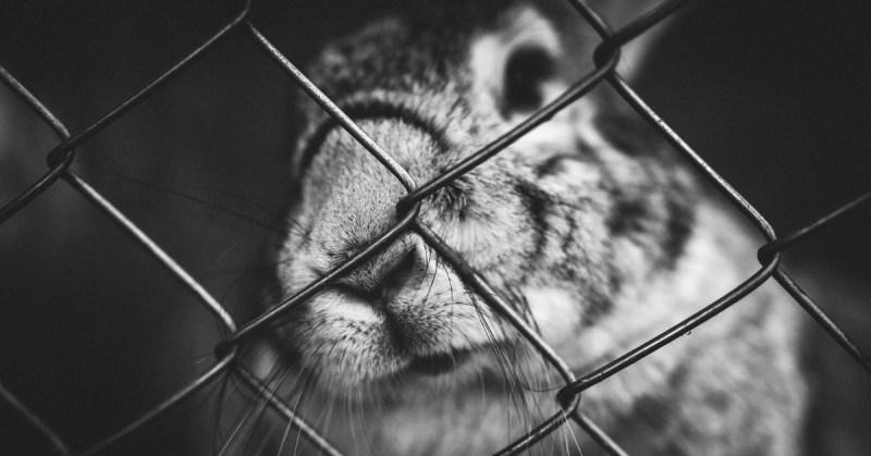 Kani katsoo häkin verkon läpi.