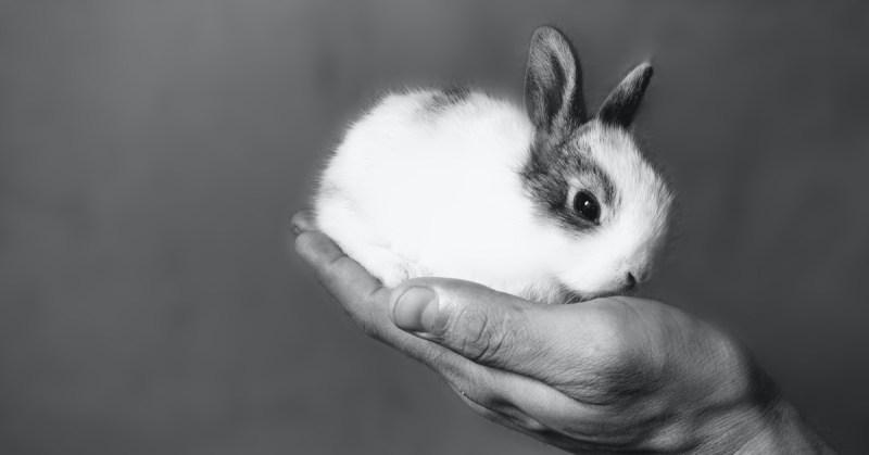 Pieni kaninpoikanen istuu ihmisen kämmenellä.