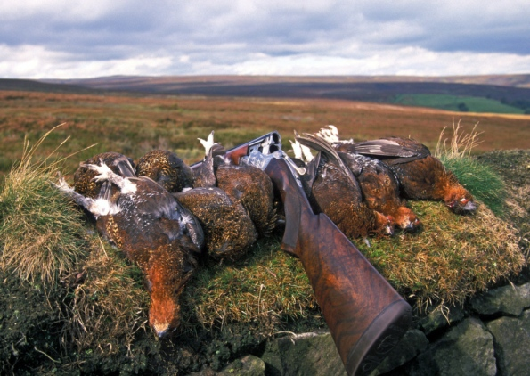 Petition To Ban Driven Grouse Shooting Please Sign