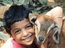 Boy goat kid love hug